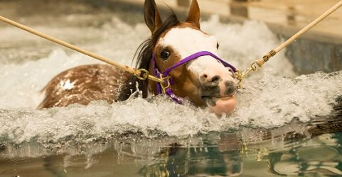 equine hydrotherapy pool installation
